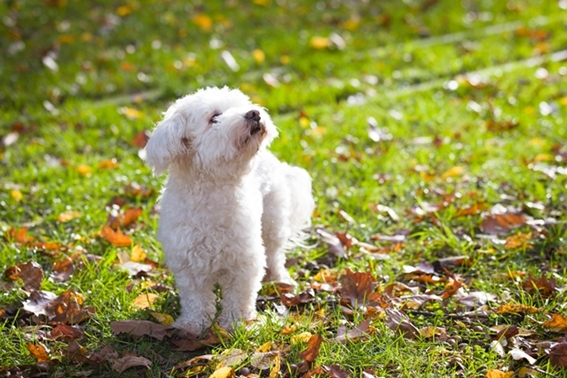 Tiergestützte Therapie - Ergotherapie mit unserem Hund Neo