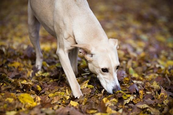 Tiergestützte Therapie - Ergotherapie mit unserem Hund Penj