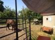 Tag der offenen Tür - Lerntherapie mit und ohne Pferd. Tiertherapie bei Praxis Seewald in Karlsruhe.
